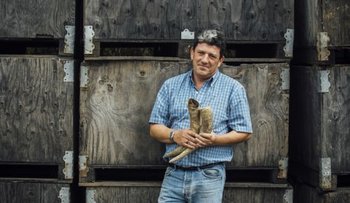 Gilles de Domingo, winemaker at Cooper Mountain Vineyards, holds two cow horns, which are part of an important Biodynamic preparation. ##Photo by Kathryn Elsesser