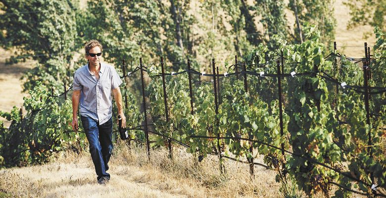 Analemma Wines winemaker Steven Thompson walking vines in the Columbia Gorge. He makes sparkling from Atavus Vineyard in White Salmon, Washington. ##Photo by Kathryn Elsesser