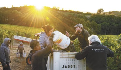 Harvest underway at Resonance Vineyard. ##PHOTO BY ANDTEA JOHNSON