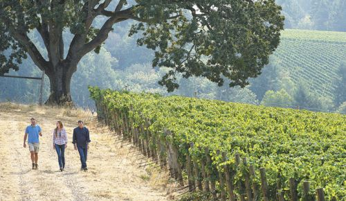 Jean-Nicolas Méo (from left), Tracy Kendall and Jay Boberg walk the grounds of Bishop Creek Vineyard, Domaine Nicolas-Jay's acquired property in the Yamhill-Carlton AVA. ##Photo by Andrea Johnson