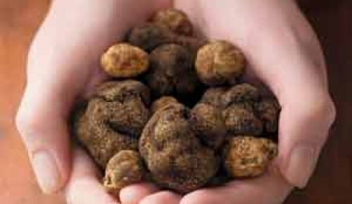 Black and white truffles.Photo by Kelly Cline