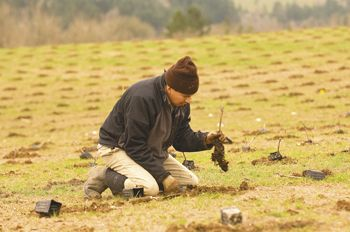 A vineyard worker helps plant Pinot Noir vines at de Lancellotti Vineyard in March