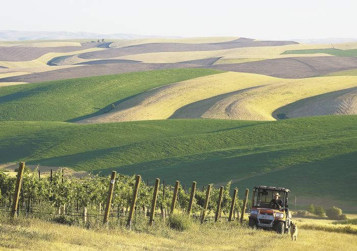Spring Valley Vineyard owner Dean Derby rides his all terrain vehicle in the vineyard, 12 miles northeast of Walla Walla,