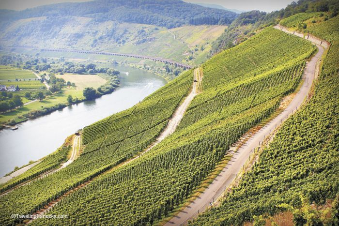The Mosel Valley's steep hillsides are covered in Riesling vines. Photo by www.travelingcanucks.com