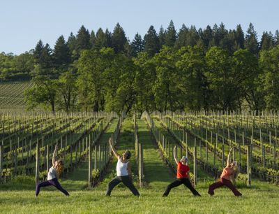 Laura Pedroni (from left), owner of Yogis Hatha Yoga Studio in downtown McMinnville, along with her students, John Knight, winemaker Remy Drabkin of Remy Wines,  and Zeah Katz perform yoga asaunas, or poses, at Stoller Vineyards in Dayton. Photo by Andrea Johnson.