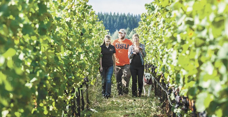 OSU and OWRI viticulturist Patty Skinkis leads students through a Willamette Valley commercial vineyard, where she is engaged in the seventh year of her fruit-drop study. ##Photo by Lynn Ketchum